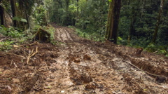 Walking along a new road bulldozed through primary rainforest in Ecuador. Stock Footage