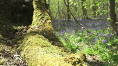 Slide Shot Over Fallen Moss Tree With Bluebells In The Background. Slow Motion Stock Footage