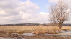 Springtime landscape, flood. Tree end sky. Stock Footage