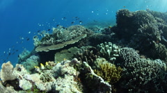 Corals and Small Fish in Raja Ampat Stock Footage