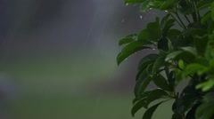 Water Dripping Off of Bush During a Rain Storm - stock footage