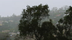 Eucalyptus Trees in Strong Winds 4k Stock Footage
