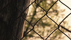 A tree in background out of The Prison: Fence metallic wire Stock Footage