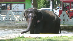 Elephant in a pool at Dondra temple splashing water Stock Footage