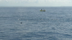 Group dolphins at sea Stock Footage