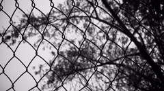 Branches of a tree in the wind behind a metal fence: silhouette Stock Footage