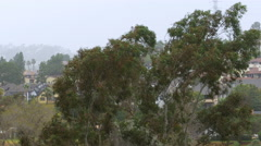 Eucalyptus Tree in Strong Winds. Rain Storm in Southern California. Stock Footage