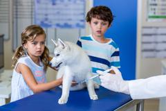 Little children holding a cute puppy and are afraid by the vet injection Stock Photos
