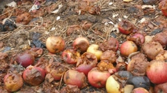 Organic waste. Rotting apples Stock Footage