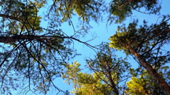 View Under The Trees  Stock Footage