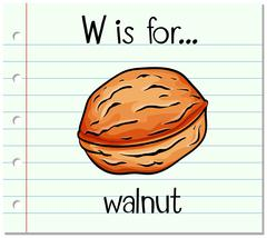 Flashcard letter W is for walnut Stock Illustration