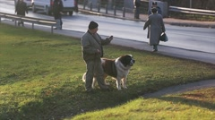 Adult man stay on grass with huge brown and white dog on lead. Policeman at road Stock Footage