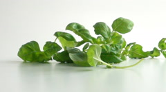 Basil leaves falling onto white surface in slow motion Stock Footage