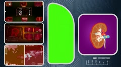 Kidney - Computer Scanning - Human detector - World - red 02 Stock Footage