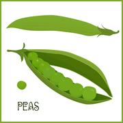 pods of green peas isolated vector illustration - stock illustration