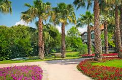 Tropical palm trees and flower beds Stock Photos