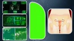 Vagina - Computer Scanning - Human detector - World - green 03 - stock footage
