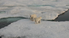 Mother polar bear and her cub on cold ice floe. - stock footage