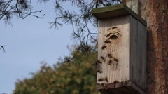 Huge hornets use wooden bird house for nesting home. 4K Stock Footage