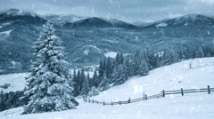Snow covered fir trees in mountains with snowfall - stock footage