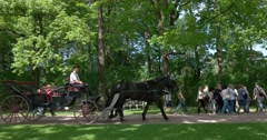The Catherine Palace. The carriage horses. Tsarskoye Selo. Tsar's Village Stock Footage
