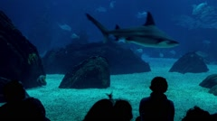 Silhouettes of people in aquarium Stock Footage