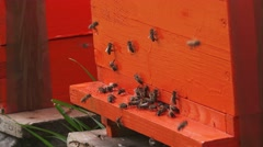 Swarm of bees and beehives - stock footage