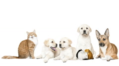 Dog and cat and rodents on a white background Stock Footage