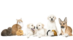 Funny pets on a white background Stock Footage