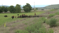 Agriculture, cowboys herding cattle in tunnel under highway Stock Footage