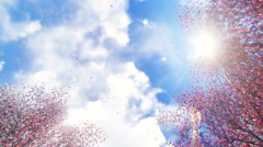 Sakura flowers and falling petals at sunlight 4K - stock footage
