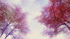 Blossoming cherry trees in sunshine 4K Stock Footage