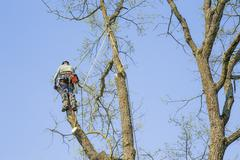 Man with special equipment pruning oak - stock photo