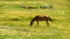 Horse graze on the mountain pastures rn - stock footage