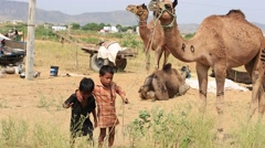 Two young boy and camel involved in Pushkar Camel Mela  , India Stock Footage