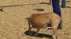 Dog with its owner at a playground Stock Footage