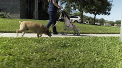 Mom with her toddler and dog walking down a suburban street 4k Stock Footage