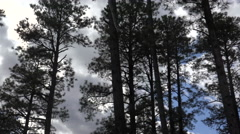 4K Drive Past Tall Trees Blue Sky Clouds Stock Footage
