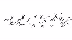 4k flock of pigeons birds fly over,migratory birds animal background. Stock Footage