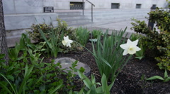 Courthouse and flower no people Stock Footage