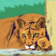 Wild Cats. Cougar Stock Illustration