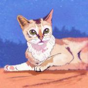 Burmilla Cat Illustration Stock Illustration