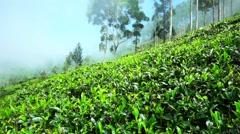 Tea plantation, Lipton's Seat in Sri Lanka. - stock footage