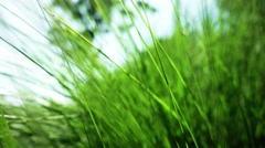 Green Grass, Slow Motion, Close Up, Dolly Shot. Stock Footage