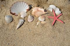 Seashells and Sea Star on Sand Stock Photos