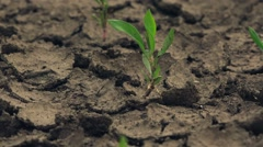 Slider shot of green plants growing on dry land Stock Footage