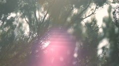 sunlight reflected in the forest, abstract texture, 1080p - stock footage