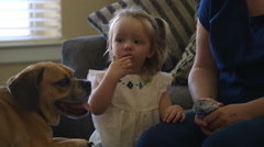 Toddler watching television and playing with the dog Stock Footage
