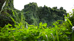 Lush Green Tropical Rainforest Flora in Oahu Hawaii - stock footage