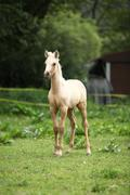 Amazing foal alone on pasturage - stock photo
